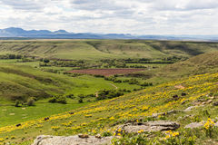 Spring Landscape in Montana. Yellow wildflowers on a hillside with a big view in Eden, Montana, USA Stock Photography