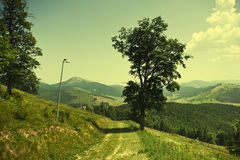 Spring landscape in mountain. Stock Image