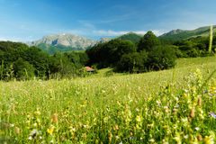 Spring landscape with mountains Stock Image