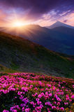 Spring flowers and sunset Stock Images
