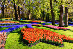 Spring landscape with multicolor tulips in beautiful city park Stock Image