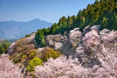 Spring Landscape in Nara, Japan Stock Photography