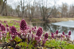 Spring landscape near the pond stock photography