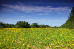 Spring landscape, Novgorod region, Russia Royalty Free Stock Photo