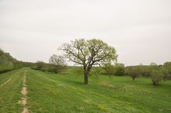 Spring landscape with old tree Stock Images