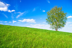 Spring landscape with a one tree in the field Stock Photo