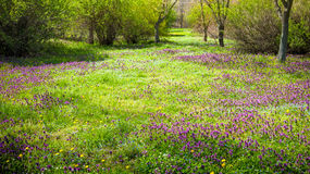 Spring landscape in park stock photography