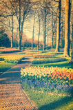 Spring landscape with park alley and multicolor flowers Stock Images