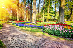 Spring landscape with park alley Stock Photo