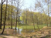 Spring landscape in the park with trees and pond. Royalty Free Stock Image