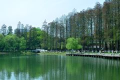 The landscape in the park. In spring, the landscape in the park. It was taken in Wuhan Liberation Park Stock Images
