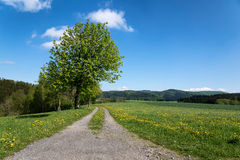 Spring landscape with path, tree and green meadow. Stock Photo