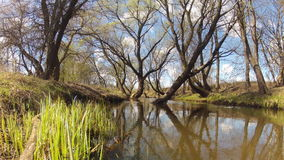 Spring landscape of plant life and trees of a small stream stock footage