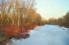 Spring landscape in the pond. Stock Images