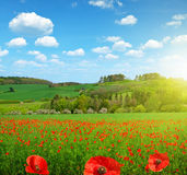Spring landscape with poppy field Royalty Free Stock Images