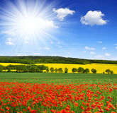 spring landscape with poppy field Stock Image