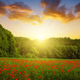 Spring landscape with poppy field Royalty Free Stock Photo