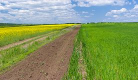 Spring landscape with rape-seed and wheat fields Stock Image