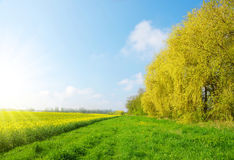 Spring landscape with rapeseed field Royalty Free Stock Photo