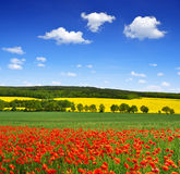 Spring landscape Royalty Free Stock Photos