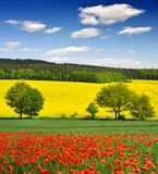 Spring landscape. With red poppy field in the Czech Republic Royalty Free Stock Photography
