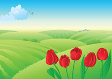 Spring landscape with red tulips. Spring rural landscape. The blue sky with easy clouds, on the distant plan there are green meadows, fields and village. In the Stock Images