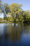 Spring landscape with reflection in the water. Trees and sky are reflected in the water royalty free stock photos