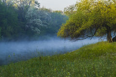 Spring landscape with the river, fog and tree. Stock Images