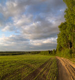 Spring landscape, the road along the edge of the forest. Along the field with fresh wheat seedlings Stock Photo