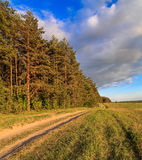 Spring landscape, the road goes between the forest and field. Pine trees lit by the setting sun Stock Photo