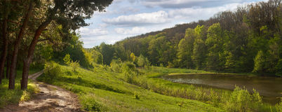 Spring landscape - road near the pine forest, next to a pond Royalty Free Stock Photography