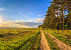 Spring landscape, the road between the pine forest. And field with fresh herbs Royalty Free Stock Photo