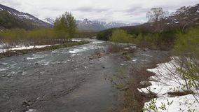 Spring landscape rough mountain river, just flowering forest along river banks. Early spring landscape of Kamchatka Peninsula: rough cold mountain river stock video