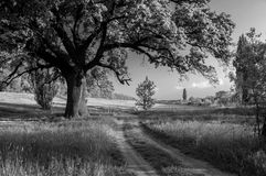 Spring landscape showing huge old oak beside country road Stock Photos