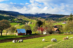Spring landscape in Slovakia. Rural countryside in Polana region. Fields and meadows with blooming cherries royalty free stock photo