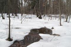 Spring landscape Stock Photo