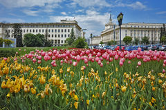 Spring Landscape of Square kniaz Alexander first Stock Photography