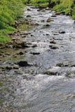 Spring landscape of stream Stock Image