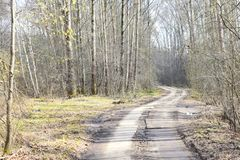 Spring landscape in the suburban forest with the road going into the distance. Crown-a set of branches and leaves at the top of the plant, continuing the trunk stock image