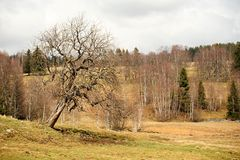 Spring landscape in Sumava Royalty Free Stock Photos