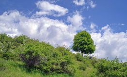 Spring landscape: green vegetation and blue sky with fluffy clouds. Spring landscape on a sunny day: green vegetation and blue sky with fluffy clouds royalty free stock photo