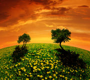 Spring landscape in the sunset. Spring trees on dandelions field in the sunset - fisheye shot Royalty Free Stock Image