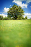 Spring landscape with tree. Spring landscape with tree in vibrant color. Blurred space can be place for any text stock images