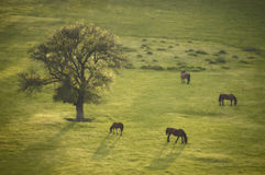 Spring landscape with tree and horse at sunset. Beautiful spring landscape with tree and horse at sunset on a green meadow Royalty Free Stock Image