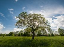 Spring landscape with tree on meadow stock photo