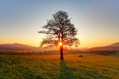 Spring landscape with tree and sun Royalty Free Stock Photo