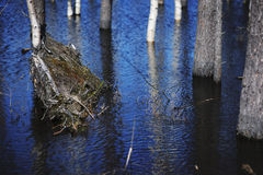 Spring landscape, tree trunks in flood waters. April Royalty Free Stock Photos