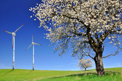 Spring landscape. Spring tree with wind turbines Stock Photos