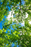 Spring landscape of trees Stock Photos