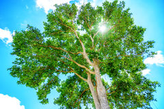 Spring landscape of trees against the sky Royalty Free Stock Photos
